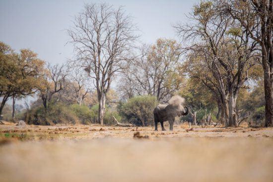 Elefante se refresca usando a própria tromba