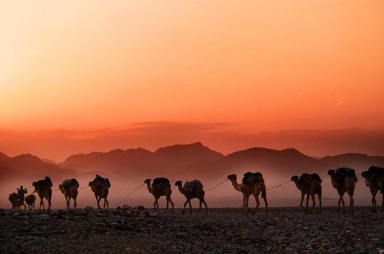 A camel caravan at dusk in Ethiopia