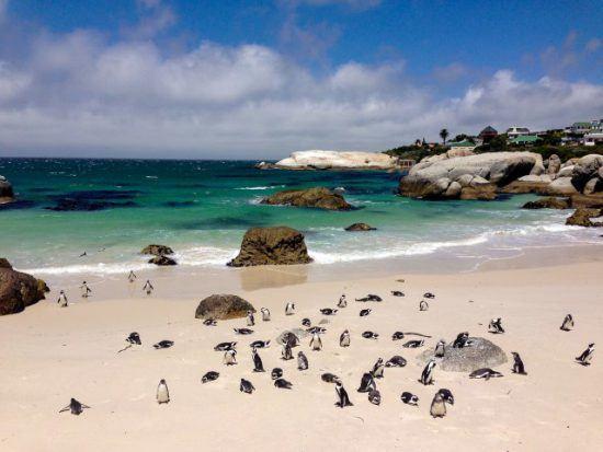 Pinguine am malerischen Boulders Beach bei Kapstadt - Aktivitäten in der Mother City