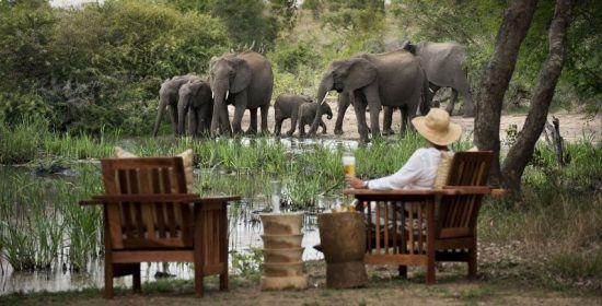 Elefanten an einem Wasserloch vorm Tanda Tula Safari Camp