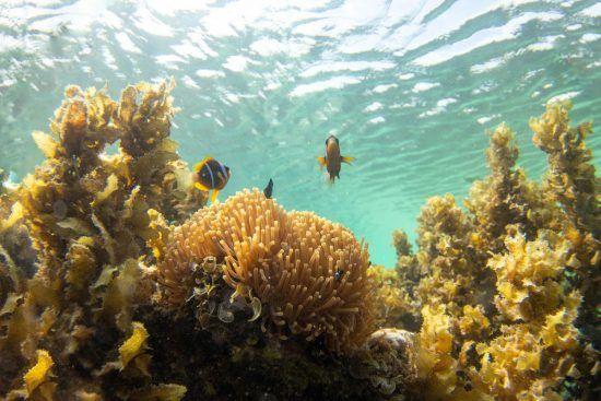 Fische zwischen Korallenriff im glasklaren Wasser vor Sansibar