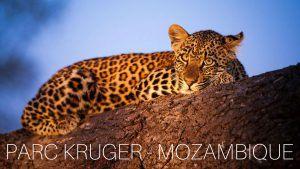Parc Kruger - Mozambique, safari et plage