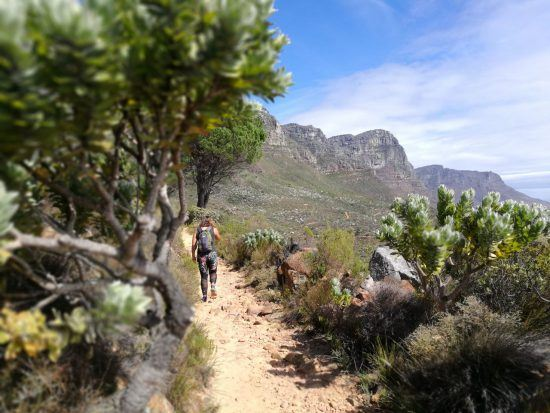 Eine Frau von hinten, die einen Weg am Tafelberg entlangwandert