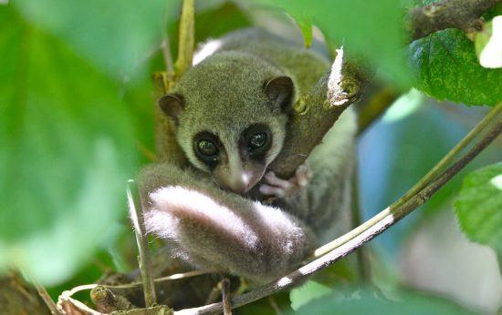 Logements à Madagascar | Lémurien