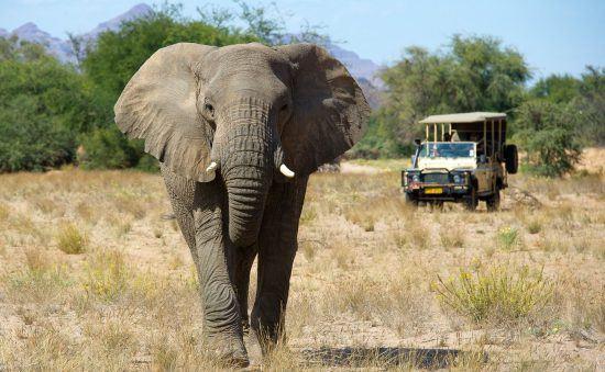 Namibia dispone de una rica fauna y una gran oferta de safaris