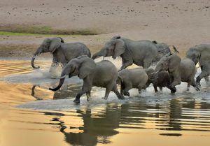 L'Addo Elephant Park est idéal pour un safari sur la Garden Route