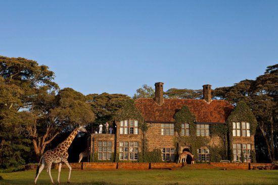 Giraffen laufen um ein Hotel herum, ein paar Gäste machen Fotos