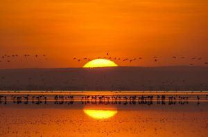 Soleil couchant sur le lac Manyara