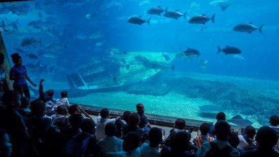 Kinder sehen den Fischen im Aquarium zu