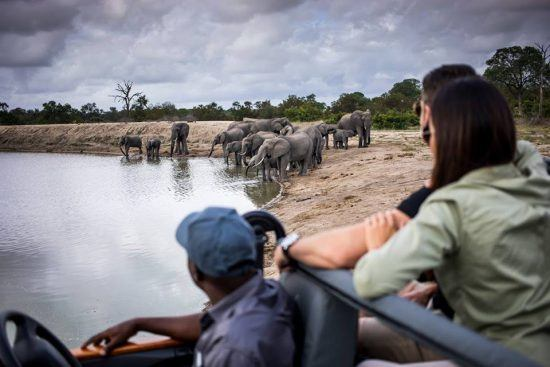 Personen im Safari-Fahrzeug beobachten Elefanten am Wasserloch