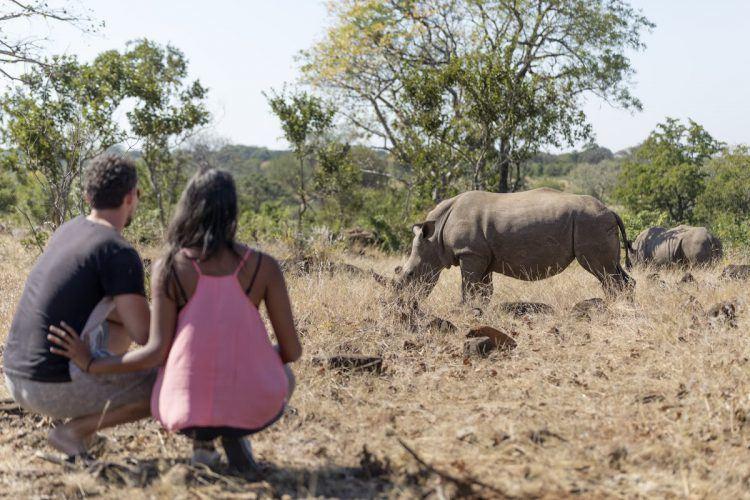 Rhinocéros dans le centre de protection de Mosi-oa-Tuya au Zimbabwe.