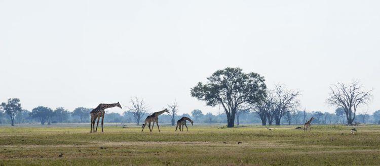 Vaste étendue et plaines dans la réserve de Hwange au ZImbabwe