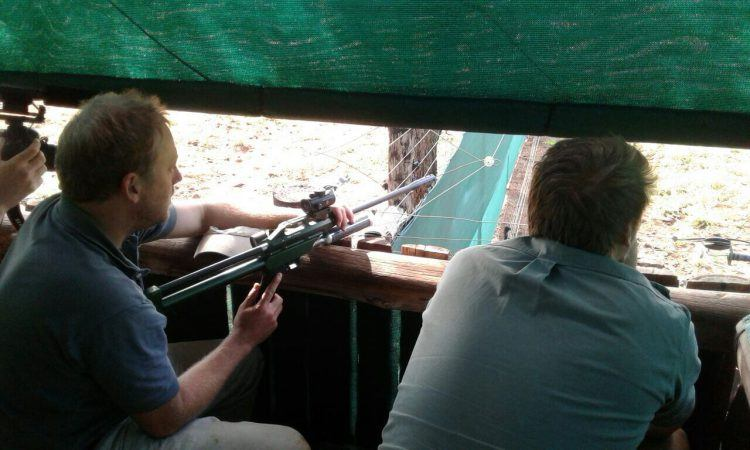 Bénévoles de WIldlife ACT utilisant un fusil chargé de sédatif pour endormir les chiens sauvages d'Afrique.