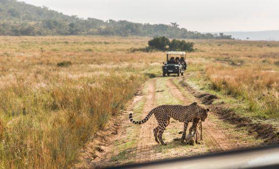 Chita brinca com filhote na reserva sul-africana Welgevonden