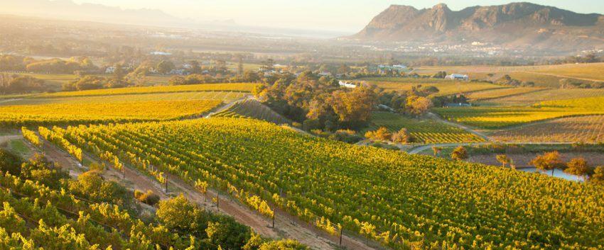 Die Weinfelder rund um Kapstadts Constantia