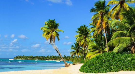 Ein Strand mit Palmen