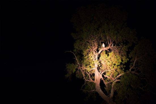 Ave é avistada durante safári noturno na Reserva Welgevonden