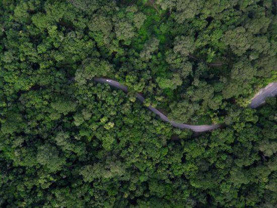 Straße, die sich durch einen Wald schlängelt, von oben - Die Garden Route in neun Tagen