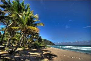 Sandy beach with palm trees against a blue sky - Reunion Island travel guide