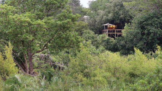 O Londolozi Tree Camp no Sabi Sand oferece oportunidades de visualização de animais