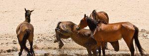 namib-desert-horses-namibia