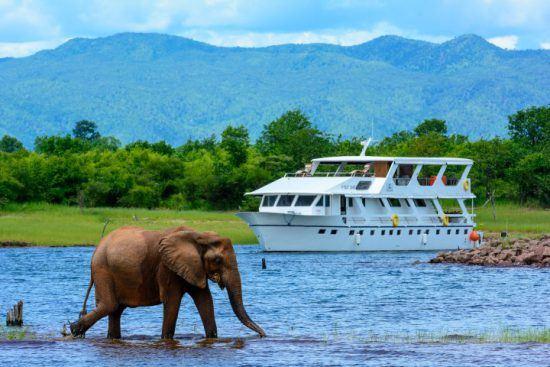 Der Luxuscruiser Matusadona auf dem Lake Kariba, wo ein Elefant durch seichte Wasser läuft