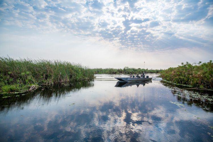 A boat trip on the Okavango River Delta