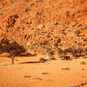 Two desert horses on a Namibian trek