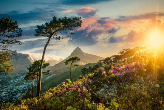 Lion's Head bei Sonnenuntergang vom Signal Hill aus - nach dem Regen in Kapstadt blühen die Blumen