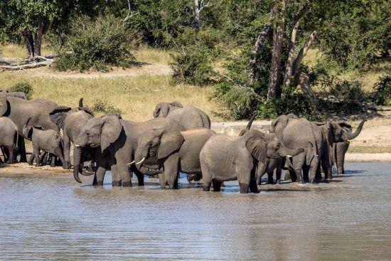 Eine Elefantenherde in einem Wasserloch
