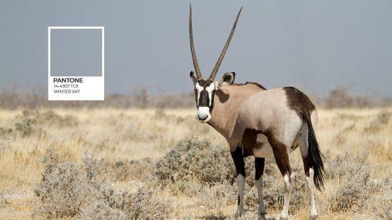 Etosha Pantone série et un oryx sur fond de ciel bleu