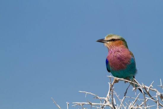 Oiseau multicolore rencontré dans un safari à Etosha en Namibie.