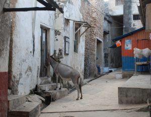 Voyage au Kenya : découvrez la pittoresque Lamu dans l'archipel de Lamu.