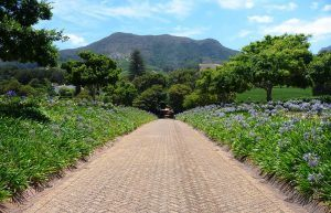 klein-constantia-wine-farm-cape-town-south-africa