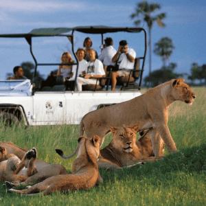 Observa a manadas de leones en vehículos de safari