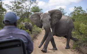 La malaria / paludisme en Afrique n'empêchent pas un safari réussi.