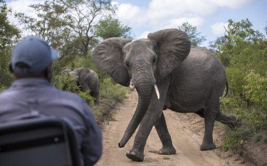 Elephant at Silvan