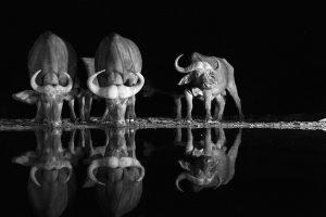 Retratos da Vida Selvagem - Africa's Photographer of the Year