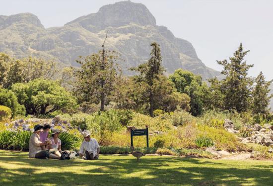 Que tal um piquenique com a família no Kirstenbosch National Botanical Garden?