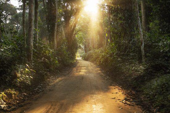 L'Ouganda, une de nos meilleures destinations pour une Digital Detox en Afrique avec sa forêt impénétrable et reculée.