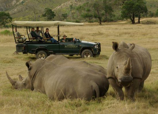 Personen auf einer Pirschfahrt beobachten zwei Nashörner