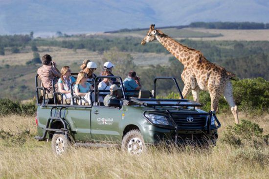 Personen auf einer Pirschfahrt im Gondwana Game Reserve beobachten eine Giraffe