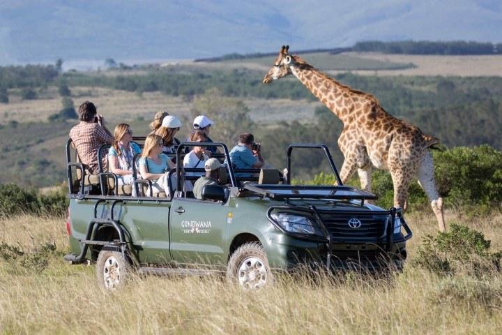 Personen auf einer Pirschfahrt im Gondwana Game Reserve beobachten eine Giraffe - Safari-Lodges entlang der Garden Route