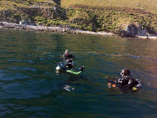 Expedição de mergulho nos arredores de Gordon's Bay promovida pela Indigo Scuba