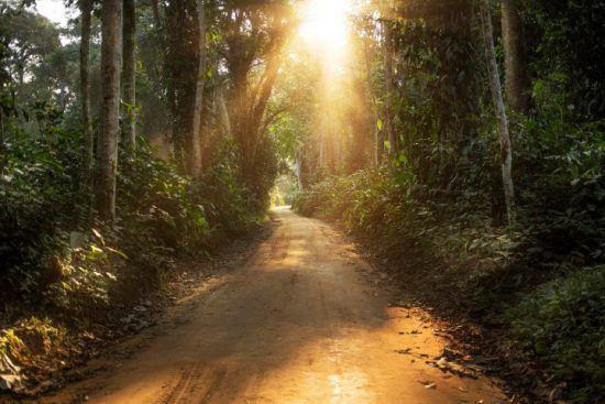 Licht fällt durch den dichten Regenwald auf einen Sandweg in der Republik Kongo