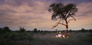 Safari Romantique à Timbavati, réserve du lion blanc.