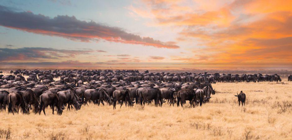 Sea testigo de la gran migración en el Serengeti