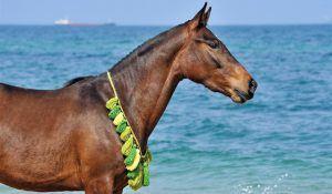 vacances à l'île maurice: balade à cheval
