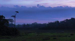 Afrique de l'Ouest   Le Parc National d'Odzala-Kokoua au coucher du soleil