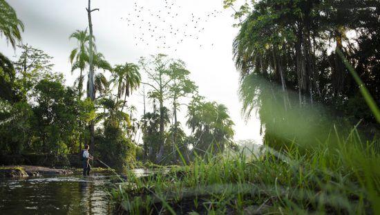 Unberührte Wildnis im Kongobecken